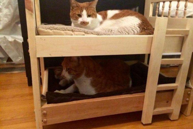 Люди, которые пытаются не любить кошек, но у них не получается (20 фото)
