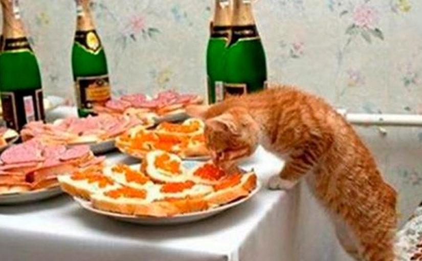 Наглость — второе счастье: 20 фото о том, как жить с котом