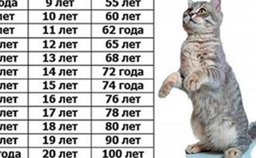 Сколько лет вашей кошке по человеческим меркам